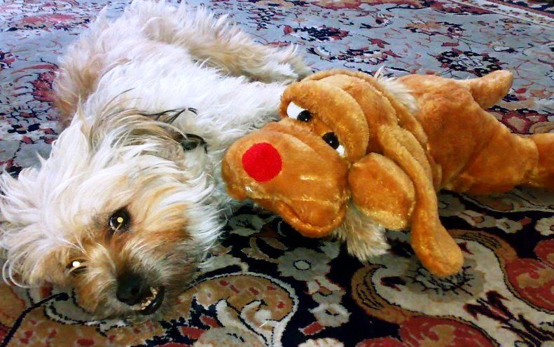 My sweet dog and her friend...