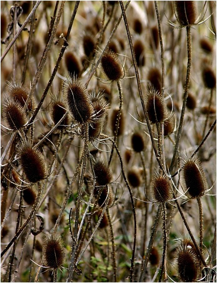Wild Flower Refuge