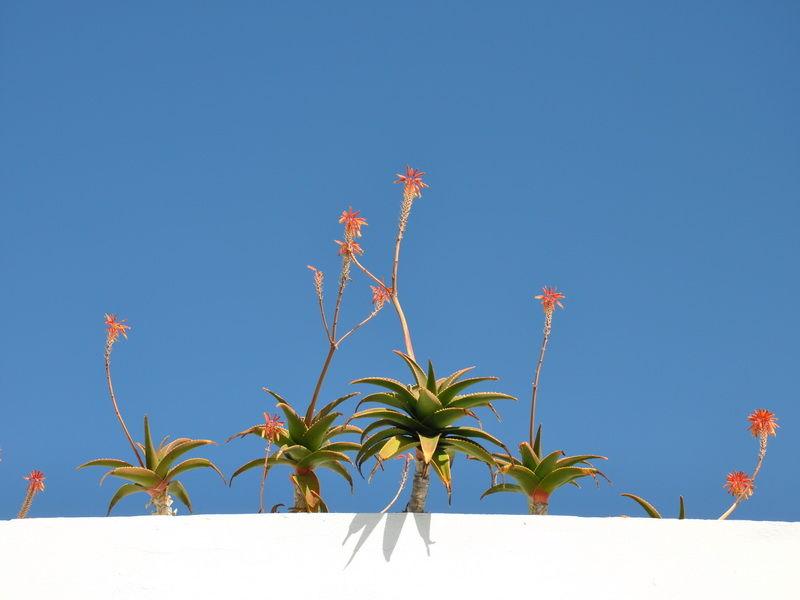 Espagne, fleurs.