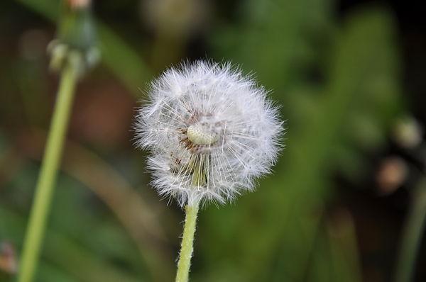 Fleurs nature
