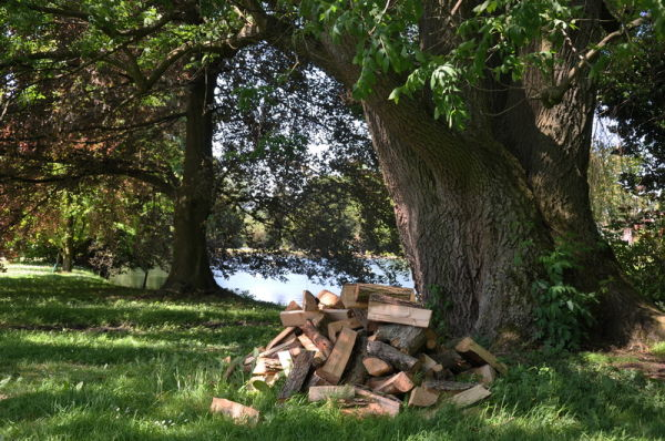 Nature, arbres