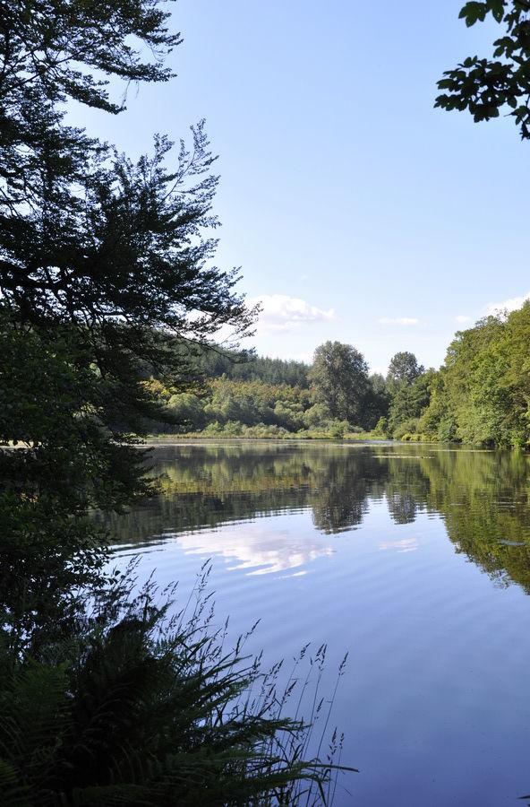 Toujours les étangs de la Rulles
