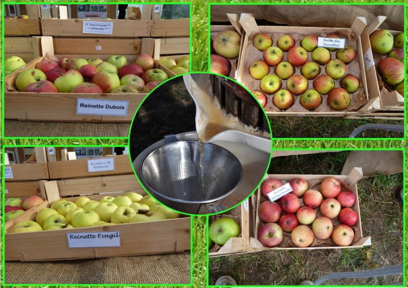 C'est la fête des pommes !
