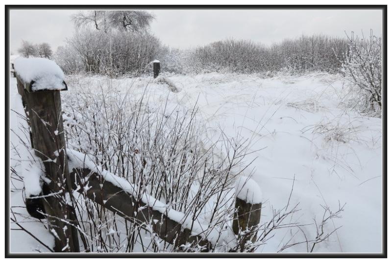 Fagnes sous la neige.