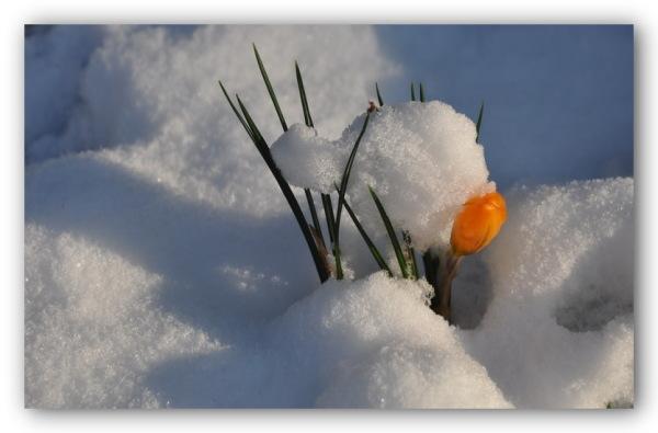 Mon jardin sous la neige.1