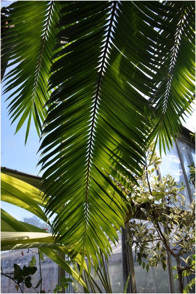 Serres 7. A l'ombre du palmier.