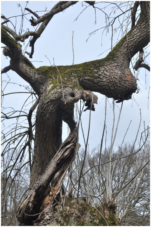 L'arbre meurtri