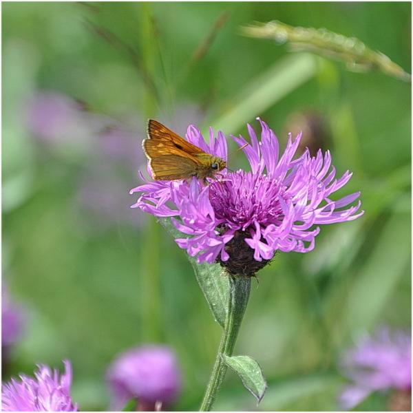 Fleur et papillon.