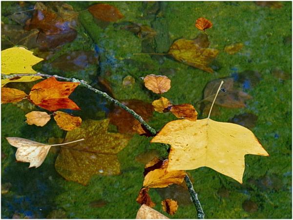 Palette d'automne.