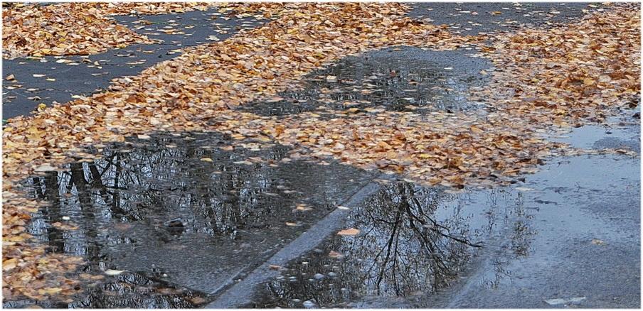 Reflets d'automne.