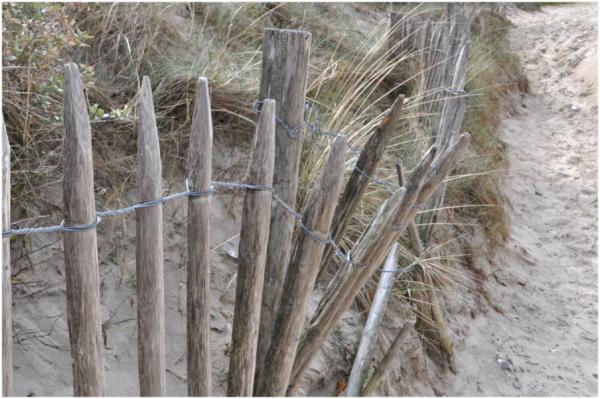 Chemin de dune.