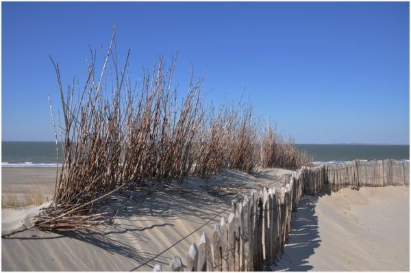 Chemin de dune 2