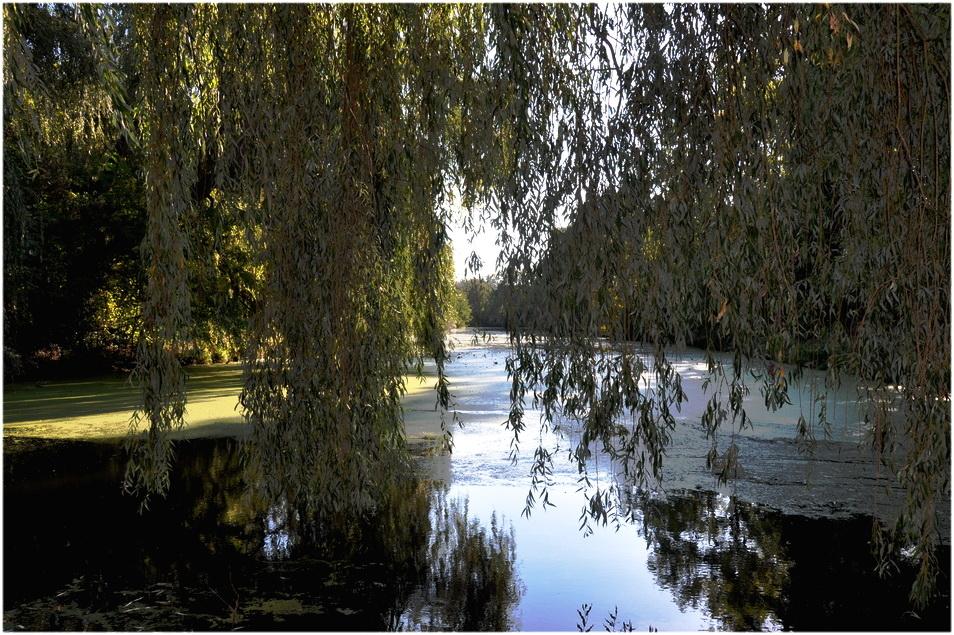 Automne en Basse Meuse.