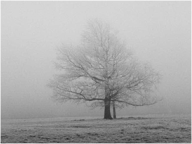Solitaire dans la brume