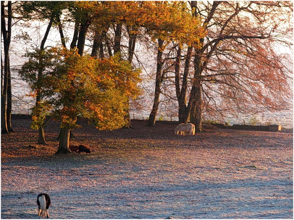 Un petit matin d'hiver.