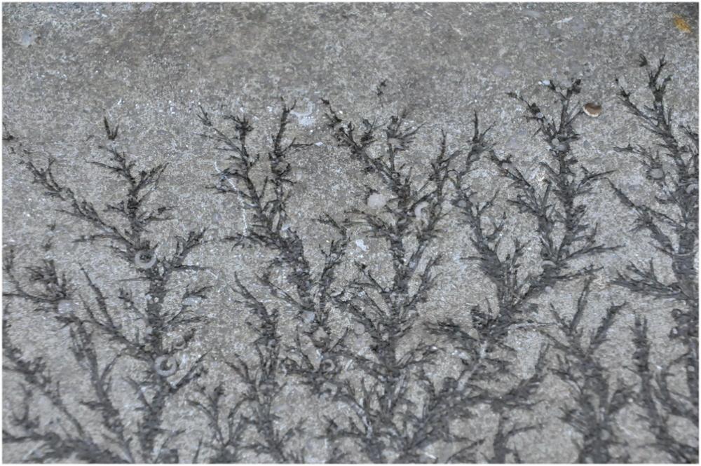 Fleurs de gel sur les marches de granite
