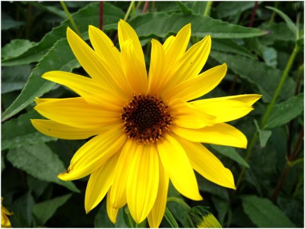 Une fleur pour vous  faire patienter !