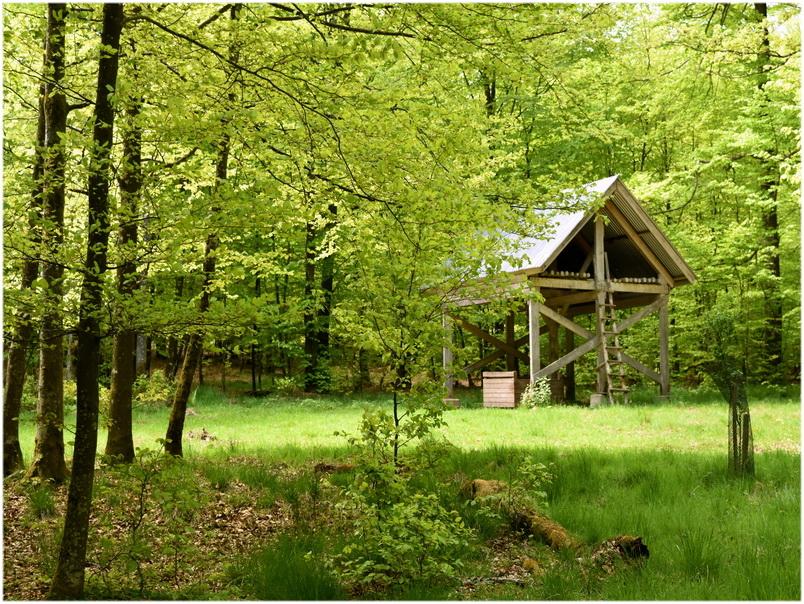 La cabane au milieu du bois