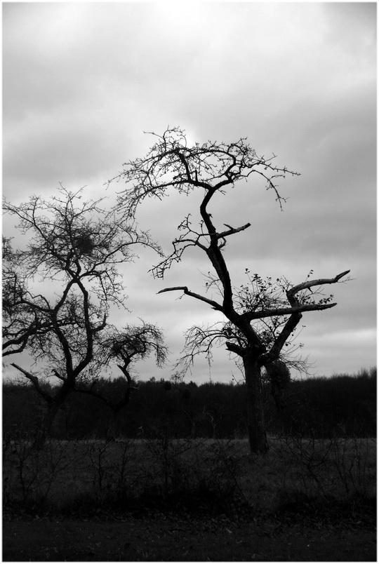 L'arbre nu.