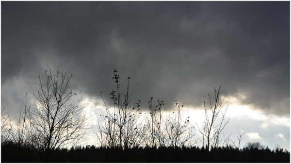 nature,nuages, arbres,