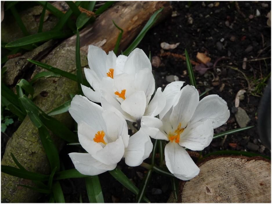 Le printemps s'annonce.