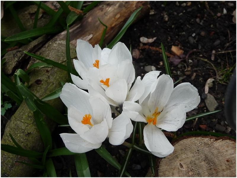 Le printemps s