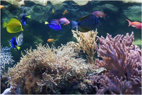 coral reef fauna