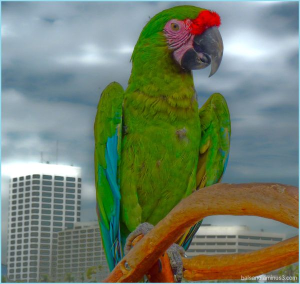 bird in the city