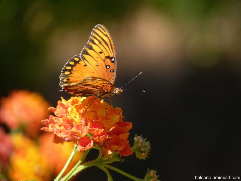 sweet flutterby