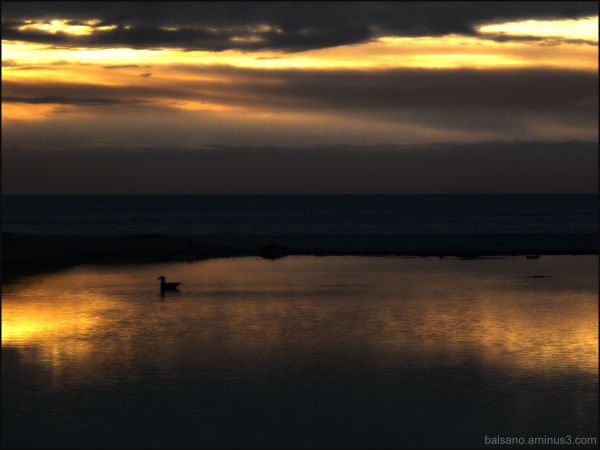 duck sunset