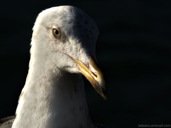 my gullfriend