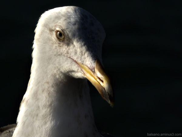 my gullfriend