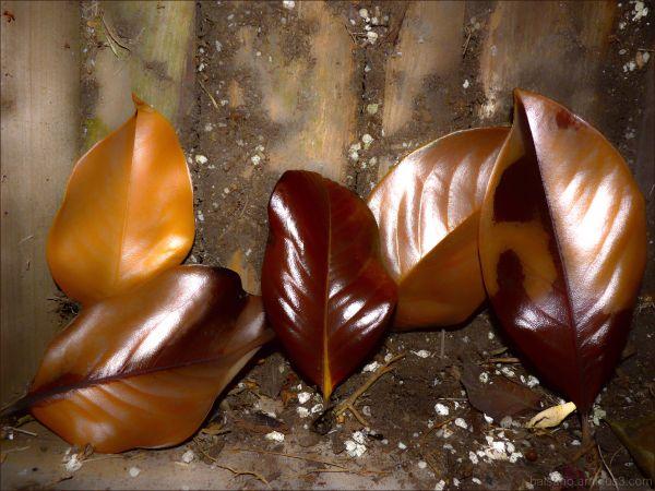 fallen summer leaves