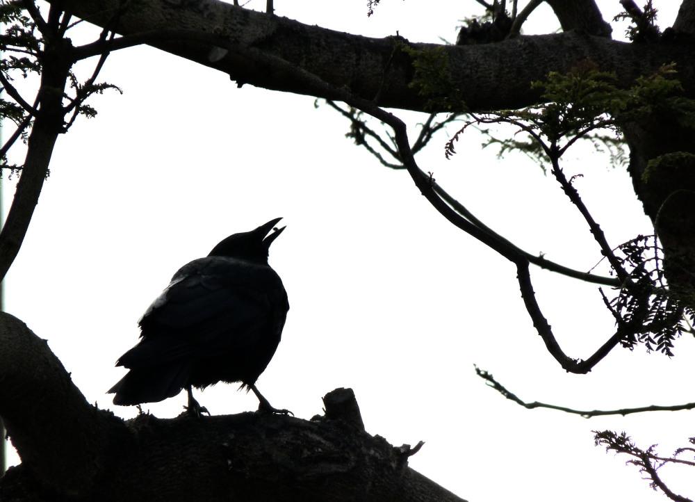 da crow, da crow