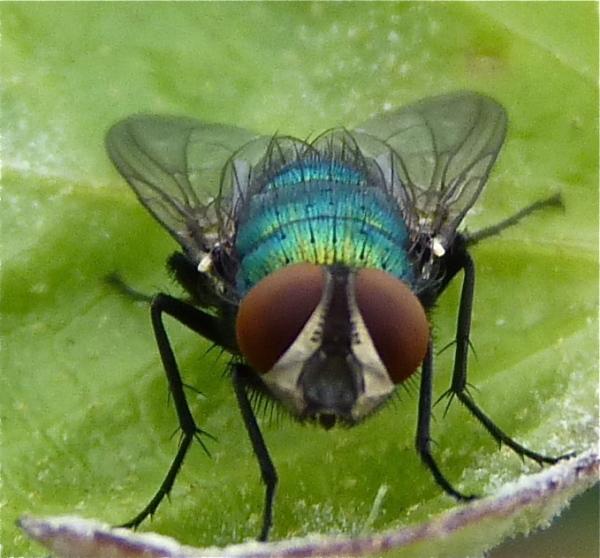 Saving a fly