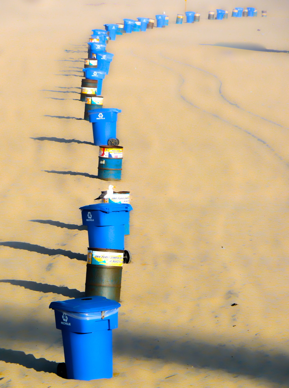 trash can, balsano, santa monica beach