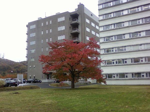 تك درخت