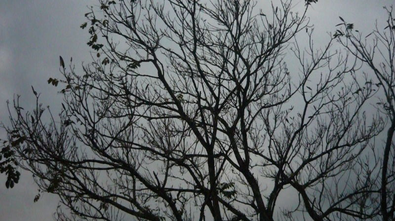 a tree, a cloudy sky and a shot at redemption.