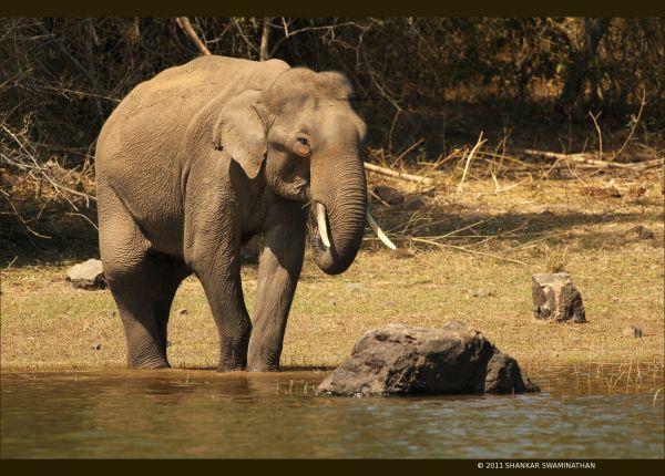 Tusker having lunch
