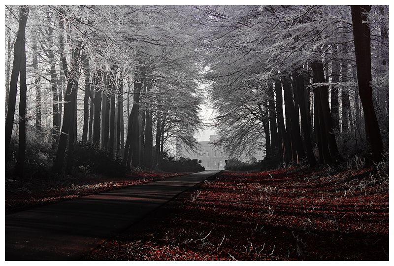 Lumière blanche sur feuilles rouges