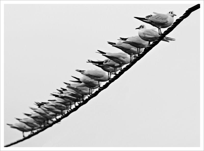 Non-conformiste