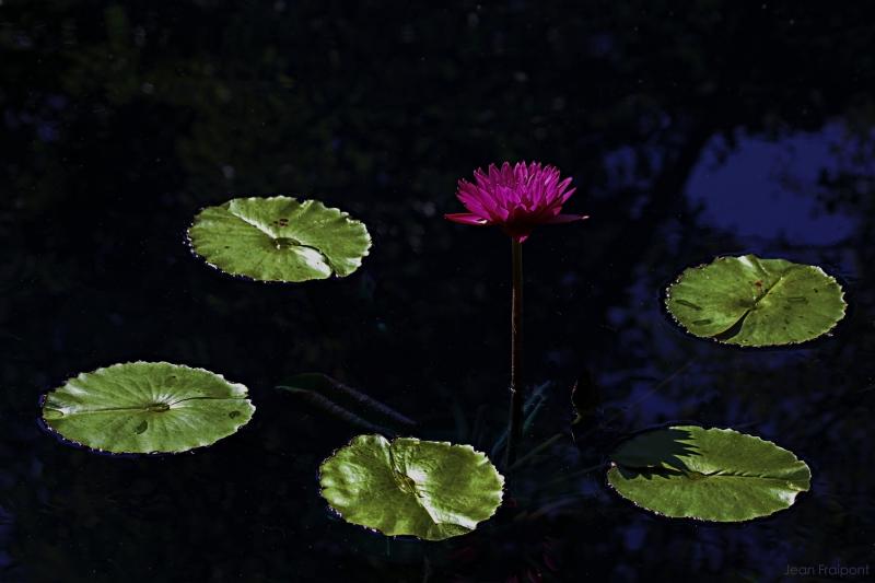 botanical garden Winnipeg