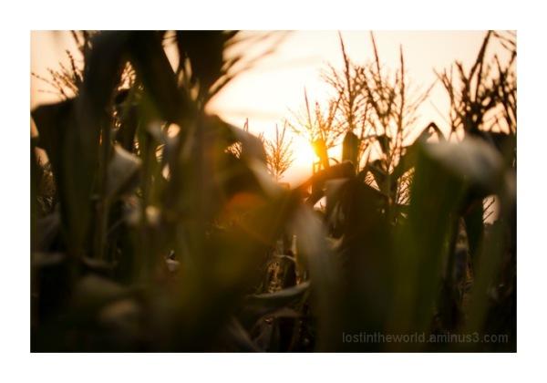 Corn light