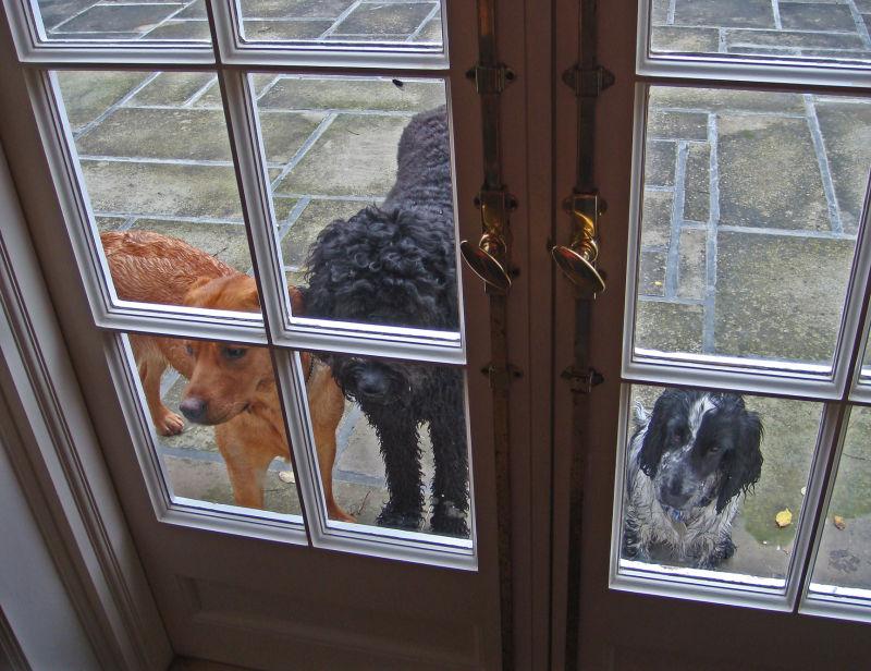 Please Let Us In