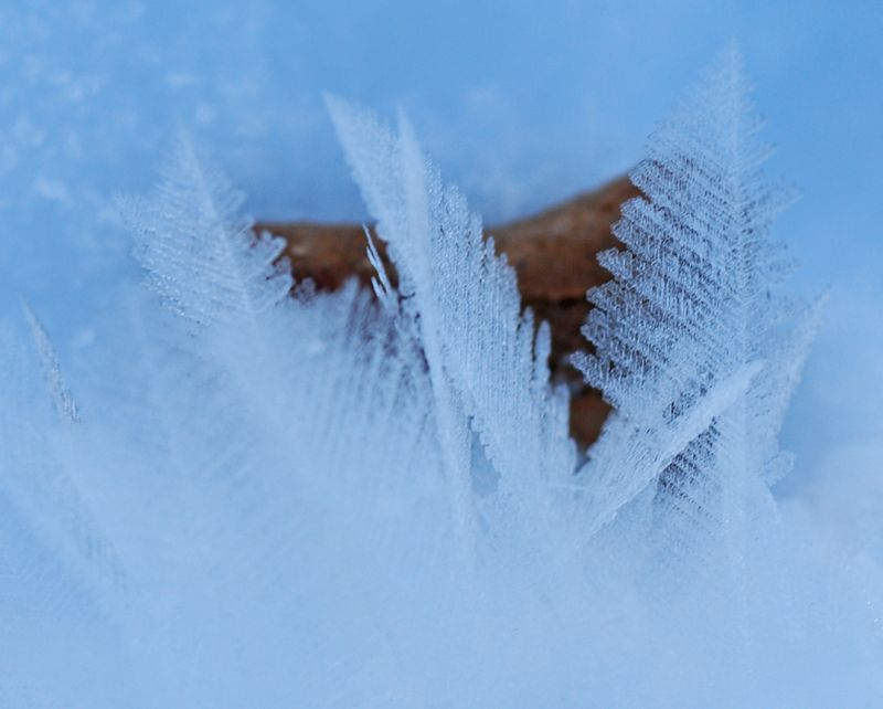 Ice Crystals & A Dog Biscuit!
