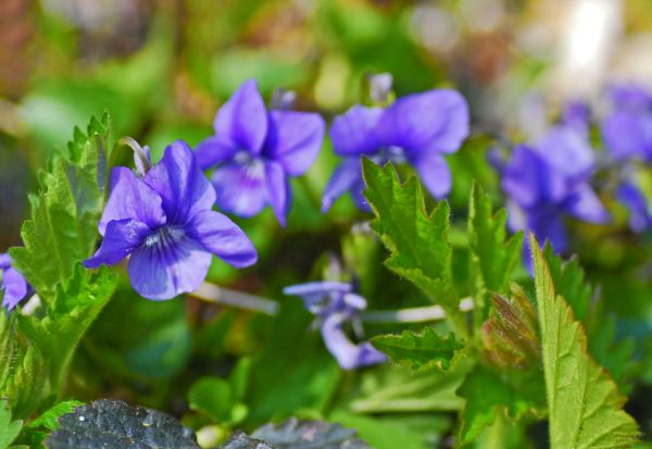 The Tiny Viola