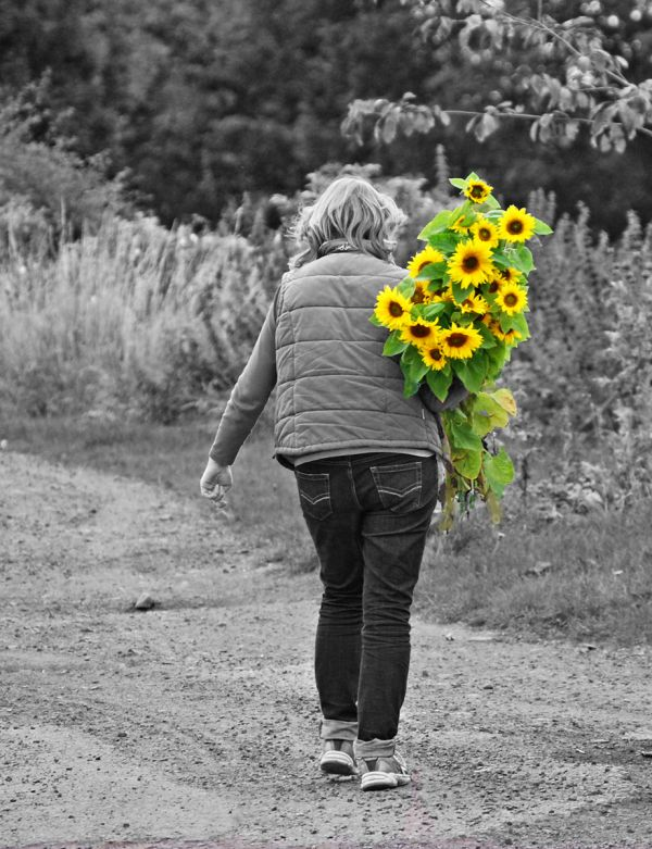 Sunflower field 3/3