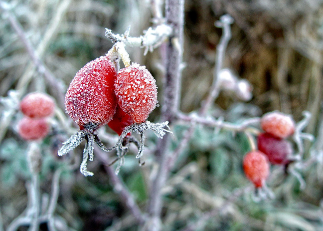 Clothed In Frost