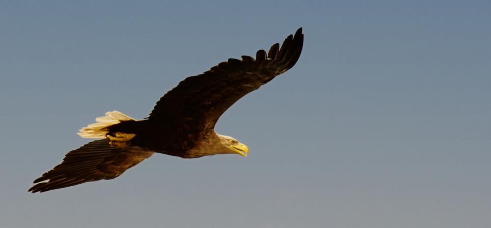 Sea Eagle 1/3