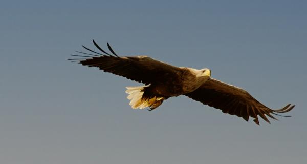 Sea Eagle 3/3